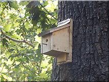 TQ1776 : Bird box on Oak Tree by Hamish Griffin
