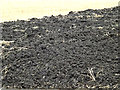 TM3672 : One of many manure heaps appearing in the area by Adrian Cable