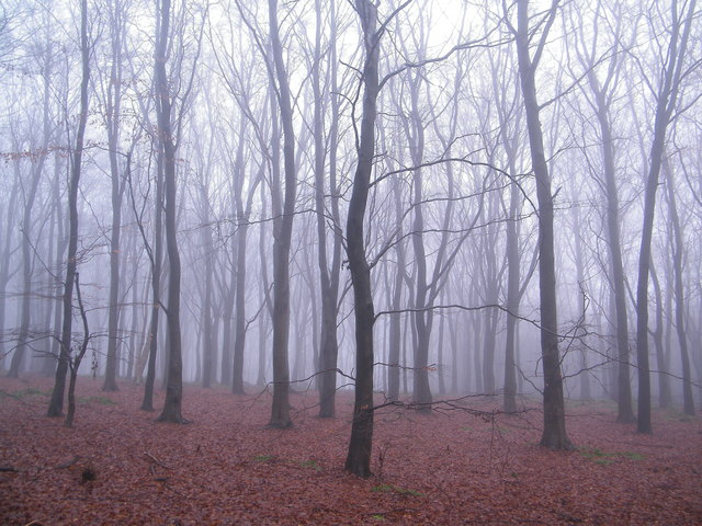 Misty Woodland in the Peak District