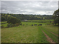 NY5864 : Cattle pasture above the Irthing at Wallholme by Karl and Ali