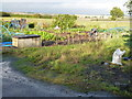 TL3180 : Allotments in Warboys, Cambridgeshire by Richard Humphrey
