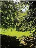 SX8963 : Trees at Cockington by Derek Harper