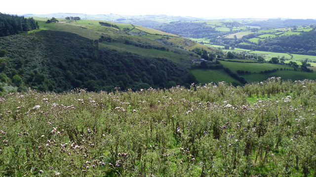 Looking down over the Teme valley from below Cwm Sanaham hill