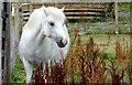 SX8274 : Trago Mills - The Den Animal Park by Julie Munckton