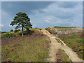 SU8350 : Heathland, Bourley Hill by Alan Hunt