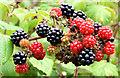 J3674 : Connswater blackberries, Belfast (September 2014) by Albert Bridge