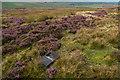 SD6864 : Fellside below Burn Moor by Tom Richardson