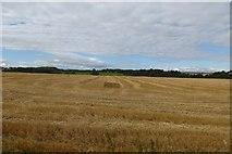 NU2422 : Stubble field near Dunstan Steads by DS Pugh