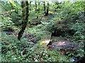 SN0623 : Llwybr Allt Henry Path by Alan Richards