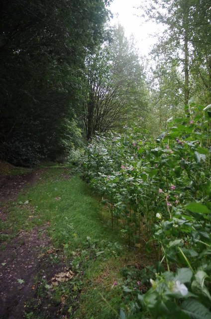Balsam & Bowsey Wood
