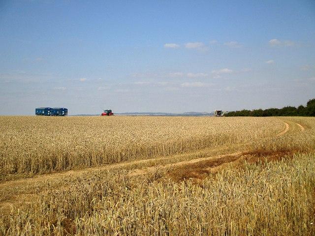 Harvest time on the edge of Cambridgeshire