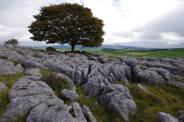 Limestone pavement, Newbiggin Crags