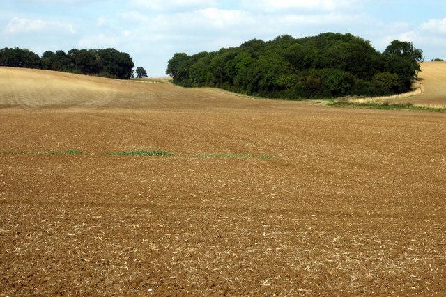 Farmland by the Bedford Road