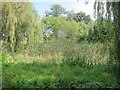 ST6360 : On the map it features as a large and prominent pond by Dr Duncan Pepper