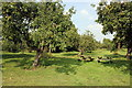 SJ5410 : The Orchard at Attingham Park by Jeff Buck