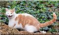 J3471 : Cat, Stranmillis, Belfast by Albert Bridge