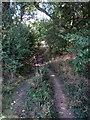 TL0940 : Greensand Ridge Walk by Philip Jeffrey