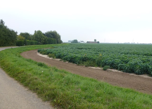 Potaoto crop on  near Yewtree House