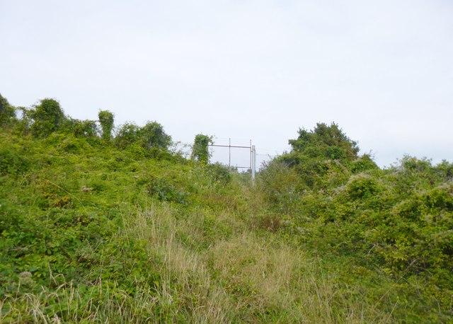 Grove, gate