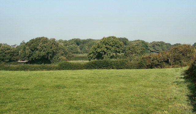 Wooded countryside by Nottage
