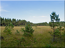 NH6860 : Bog lake in the Millbuie Forest by Julian Paren