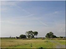 TQ7178 : Towards the Poplars, September 2014 by Stefan Czapski
