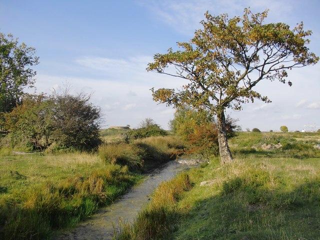Marsh ditch near the Poplars