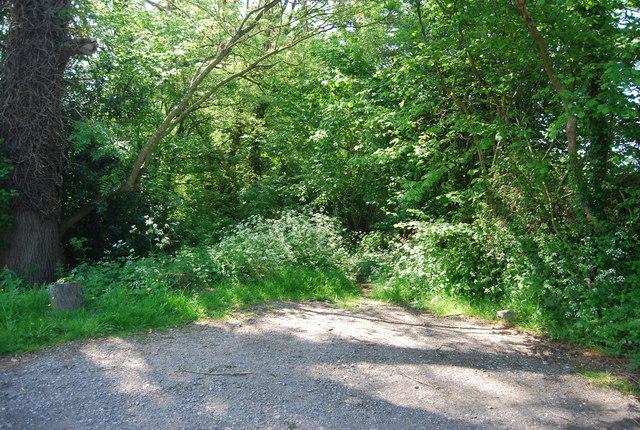 Footpath off Cornford Lane by N Chadwick