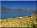 NG5114 : Cattle north of Elgol by John Allan