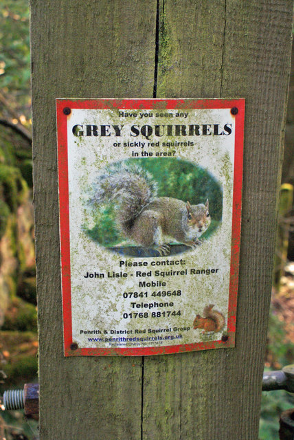Squirrel notice