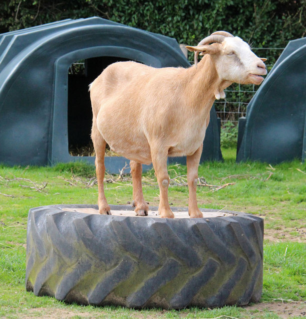 Hillside Animal & Shire Horse Sanctuary, West Runton - Animal rescue