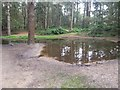 SU9229 : Puddle at Blackdown by easthantsxc