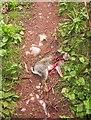 SX9170 : Dead rabbit, Ridge Road by Derek Harper