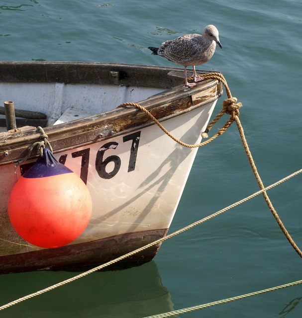 Boat and gull, West Looe