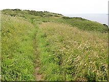 SM7709 : On the Coast Path by Tony Atkin