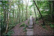 NZ7805 : Causey-path in East Arnecliff Wood by Bill Boaden