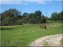 SO3829 : Ewyas Harold Common by Hugh Venables