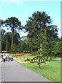 TA2069 : Monkey puzzle trees, Sewerby Hall gardens by JThomas