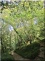 SX2354 : Path junction, Kilminorth Wood by Derek Harper
