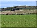 NR2163 : Hay bales at Kilchoman by Oliver Dixon