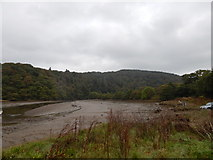 SX4764 : River Tavy at Maristow Quay by Hamish Griffin
