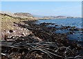 NM4217 : Kelp on the shoreline of the Ross of Mull, Isle of Mull by Claire Pegrum