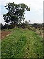 TL0854 : Footpath to Wilden by Philip Jeffrey