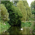 SJ9312 : Canal south of Penkridge, Staffordshire by Roger  Kidd