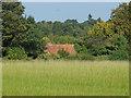 TQ0852 : Field near West Horsley by Alan Hunt