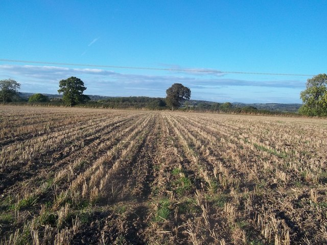 Stubble Field seen from the Centenary Way