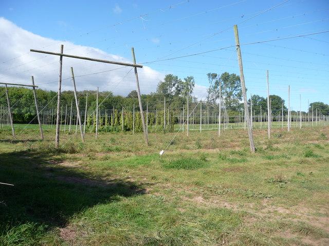 Hop fields