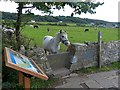 SS8877 : Horse on the Wales Coast Path by Robin Drayton