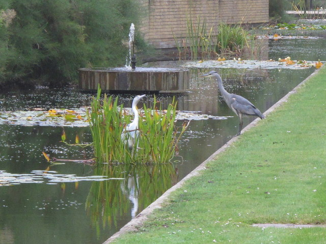 Herons, live and sculptured, St Catherine's College, Oxford