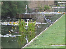 SP5206 : Herons, live and sculptured, St Catherine's College, Oxford by David Hawgood